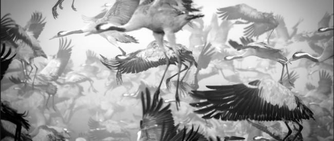 миграция животных, фото